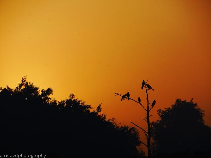 Sun- rise of Hope.